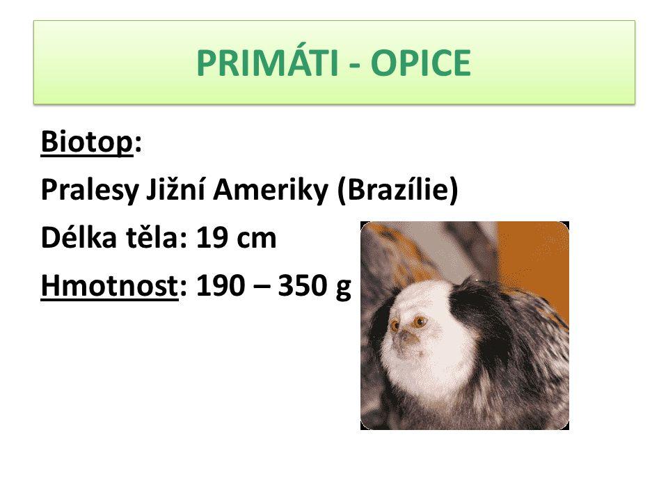 PRIMÁTI - OPICE Biotop: Pralesy Jižní Ameriky (Brazílie) Délka těla: 19 cm Hmotnost: 190 – 350 g