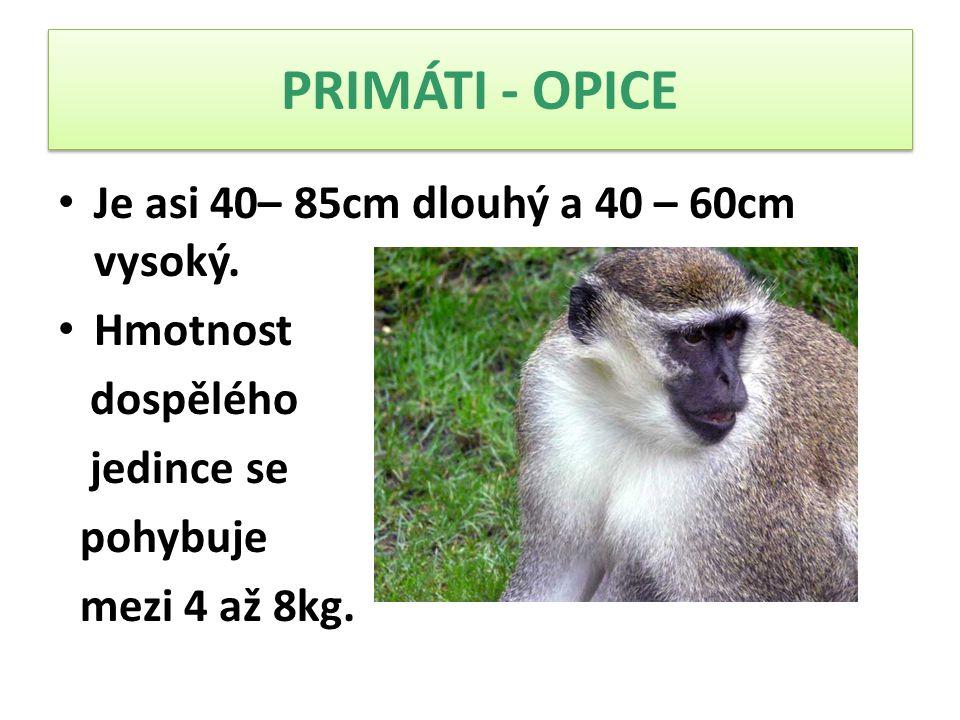 Je asi 40– 85cm dlouhý a 40 – 60cm vysoký. Hmotnost dospělého jedince se pohybuje mezi 4 až 8kg.