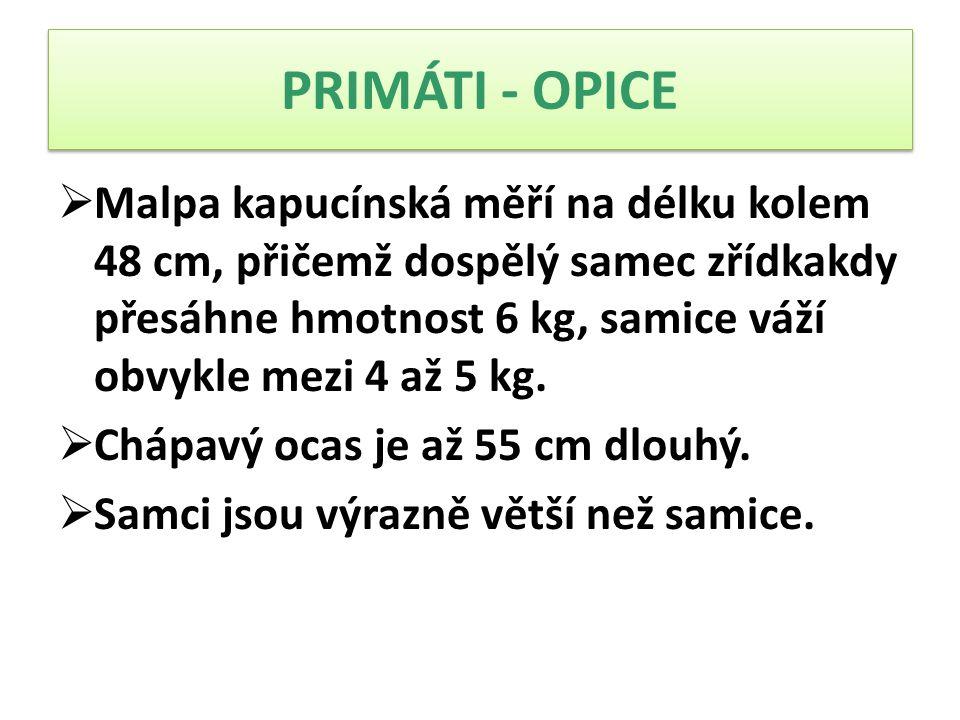  Malpa kapucínská měří na délku kolem 48 cm, přičemž dospělý samec zřídkakdy přesáhne hmotnost 6 kg, samice váží obvykle mezi 4 až 5 kg.  Chápavý oc