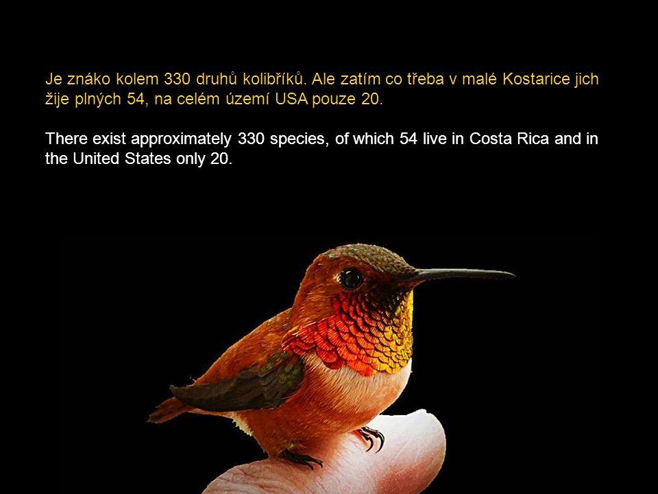 Významnou roli hrají kolibříci v ekosystému, jelikož se podílejí na opylování květů. Důležitá je v tom jejich velká přizpůsobivost různému prostředí.