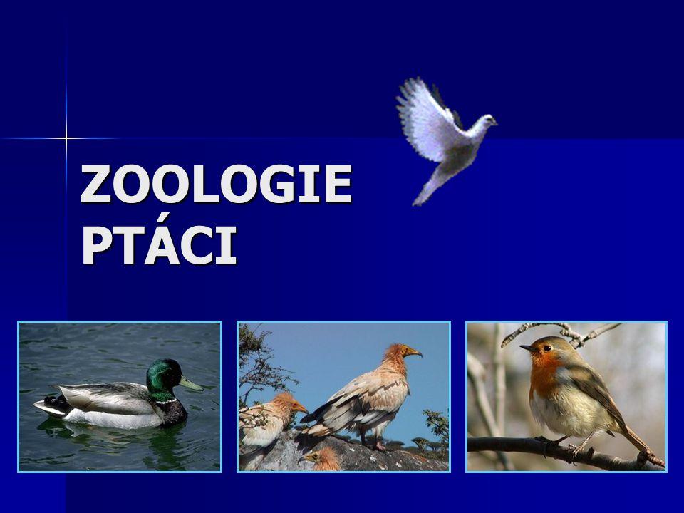 SOŠS a SOU KadaňZoologie - Ptáci2 Systematické zařazení – I.