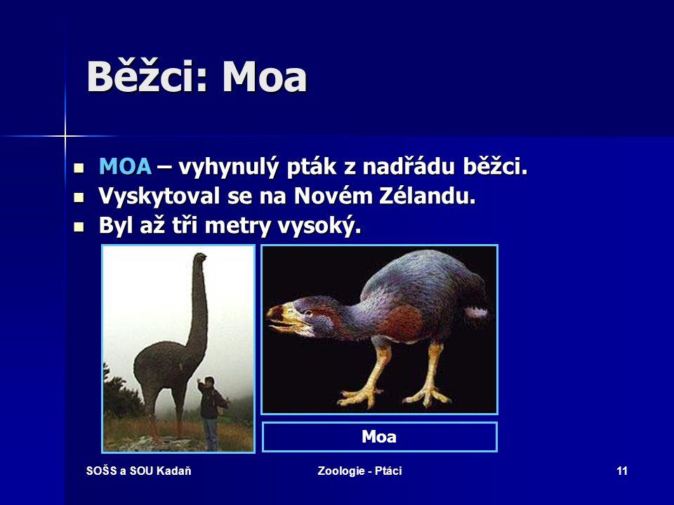 SOŠS a SOU KadaňZoologie - Ptáci11 Běžci: Moa MOA – vyhynulý pták z nadřádu běžci. MOA – vyhynulý pták z nadřádu běžci. Vyskytoval se na Novém Zélandu
