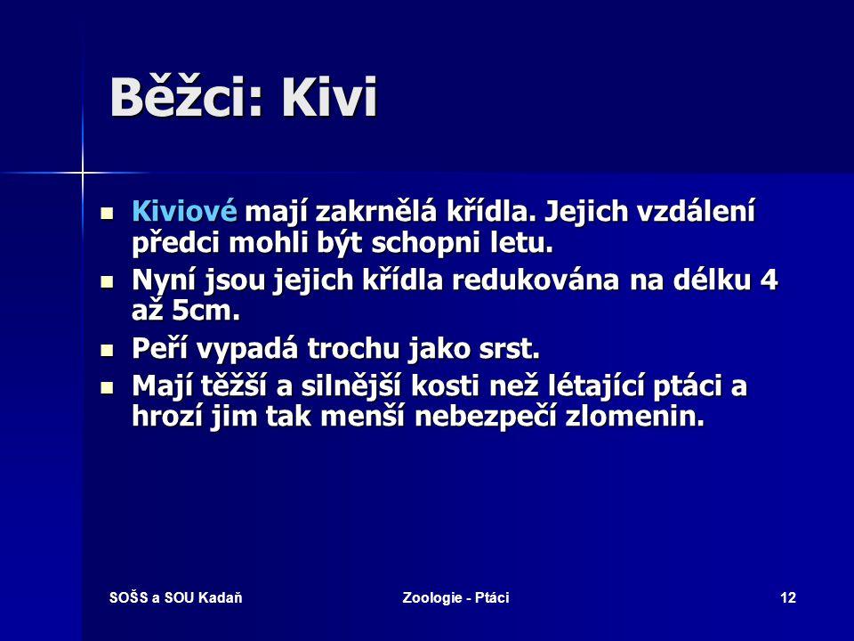 SOŠS a SOU KadaňZoologie - Ptáci12 Běžci: Kivi Kiviové mají zakrnělá křídla. Jejich vzdálení předci mohli být schopni letu. Kiviové mají zakrnělá kříd