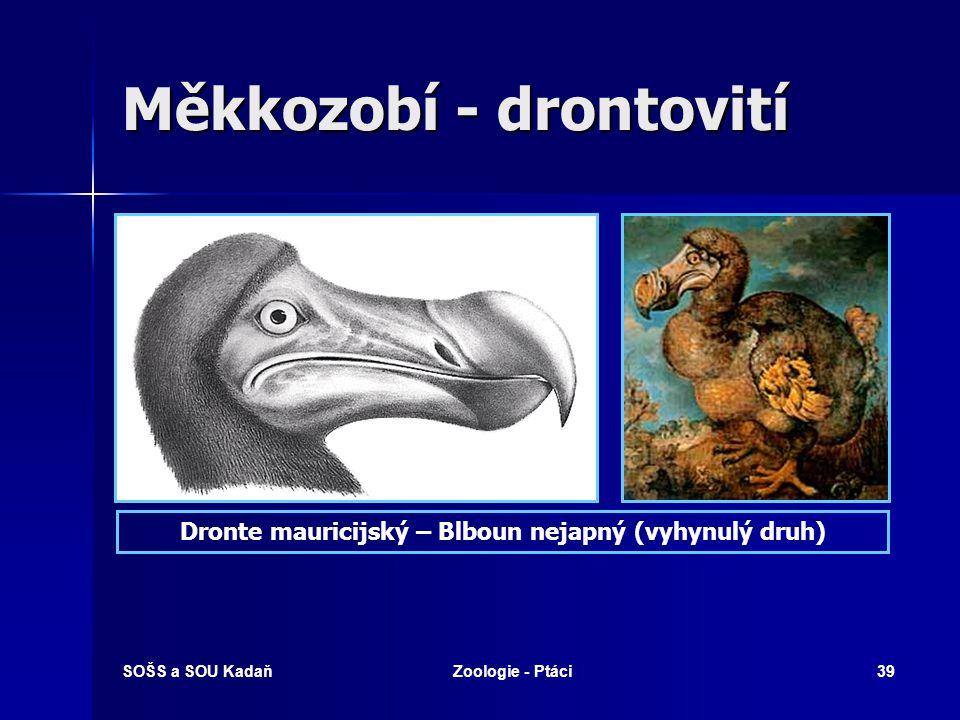SOŠS a SOU KadaňZoologie - Ptáci39 Měkkozobí - drontovití Dronte mauricijský – Blboun nejapný (vyhynulý druh)