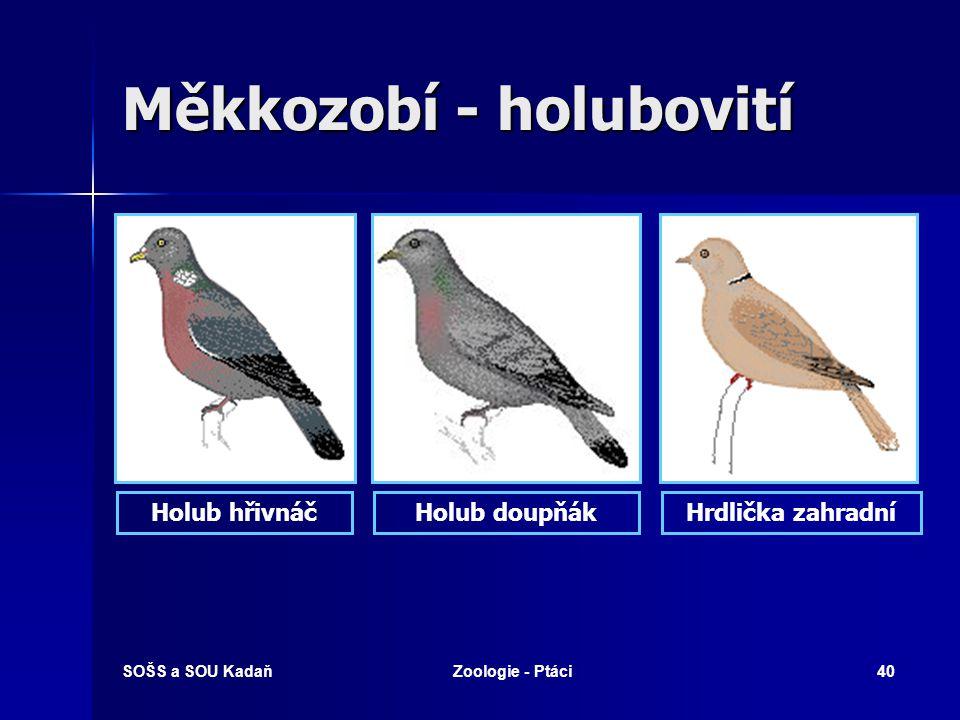 SOŠS a SOU KadaňZoologie - Ptáci40 Měkkozobí - holubovití Holub hřivnáčHolub doupňákHrdlička zahradní
