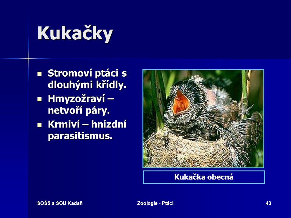 SOŠS a SOU KadaňZoologie - Ptáci43 Kukačky Stromoví ptáci s dlouhými křídly. Stromoví ptáci s dlouhými křídly. Hmyzožraví – netvoří páry. Hmyzožraví –