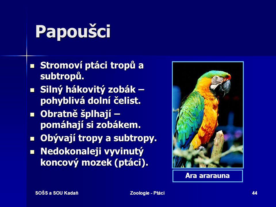 SOŠS a SOU KadaňZoologie - Ptáci44 Papoušci Stromoví ptáci tropů a subtropů. Stromoví ptáci tropů a subtropů. Silný hákovitý zobák – pohyblivá dolní č