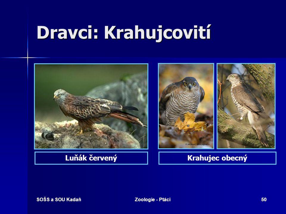 SOŠS a SOU KadaňZoologie - Ptáci50 Dravci: Krahujcovití Luňák červenýKrahujec obecný
