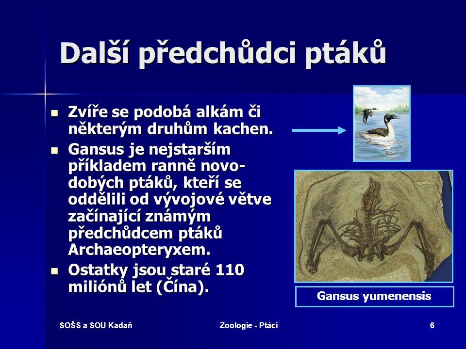 SOŠS a SOU KadaňZoologie - Ptáci67 Které pojmy spolu souvisí.