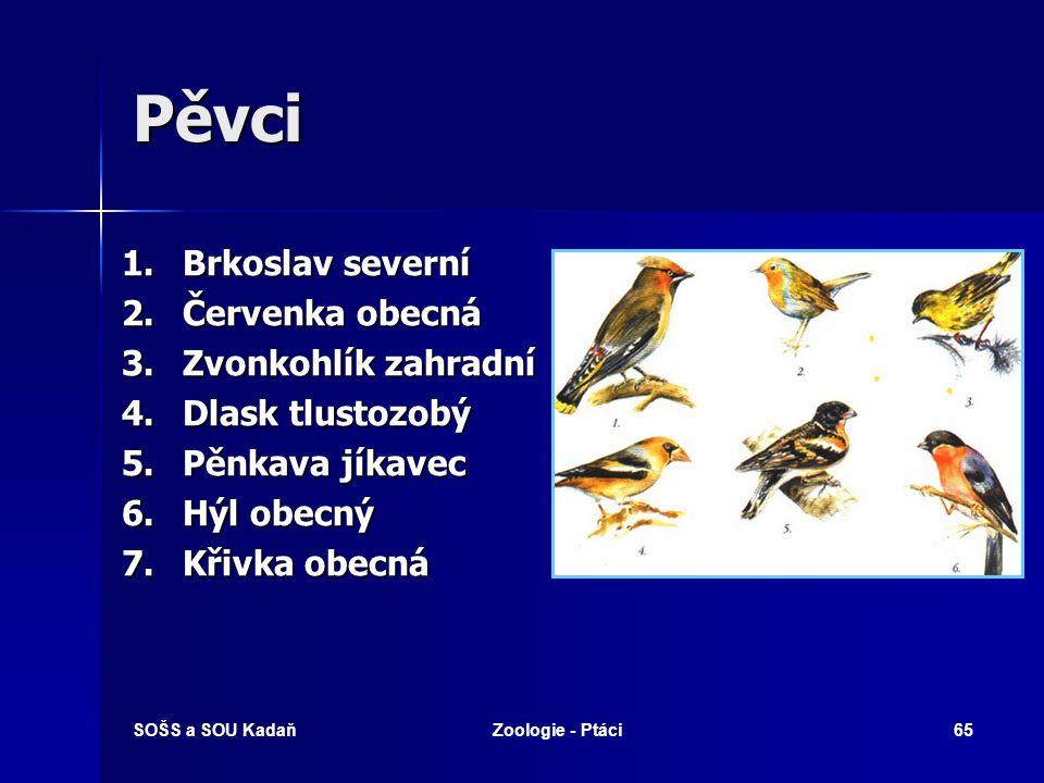 SOŠS a SOU KadaňZoologie - Ptáci65 Pěvci 1. Brkoslav severní 2. Červenka obecná 3. Zvonkohlík zahradní 4. Dlask tlustozobý 5. Pěnkava jíkavec 6. Hýl o