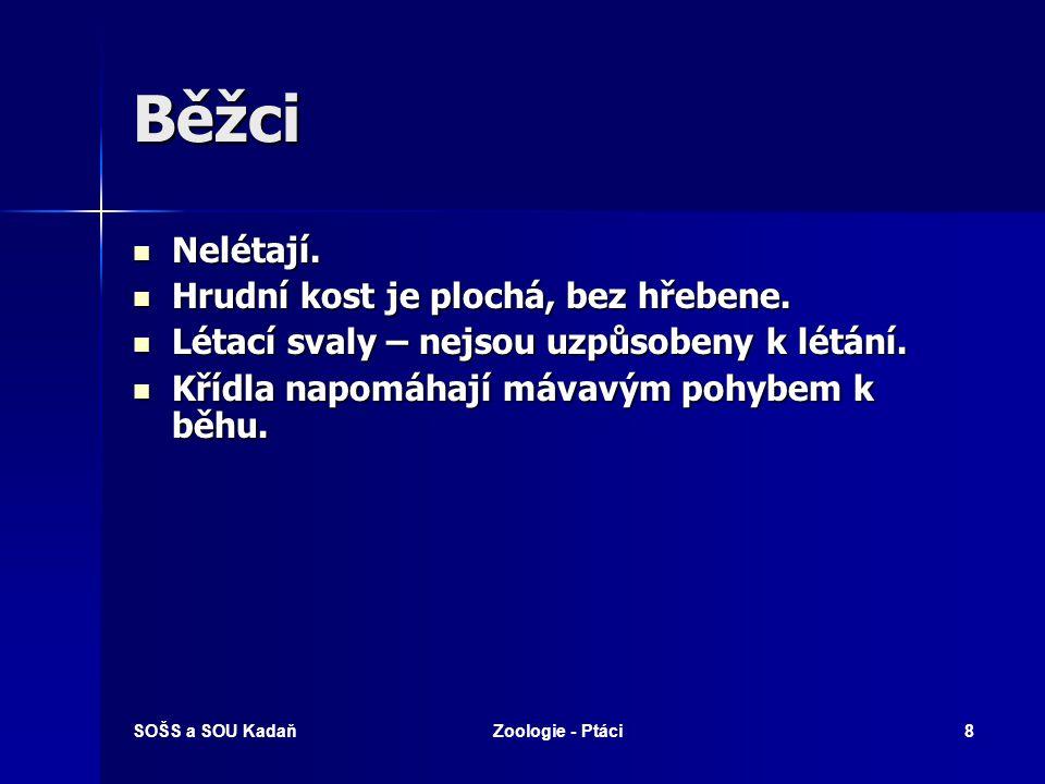 SOŠS a SOU KadaňZoologie - Ptáci49 Dravci