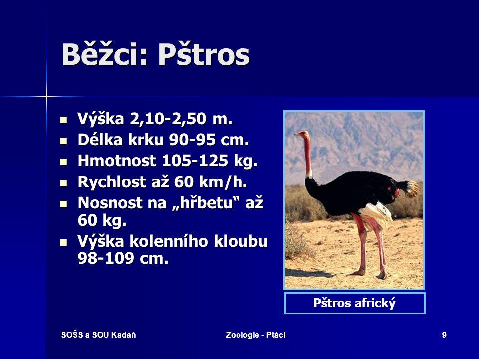 SOŠS a SOU KadaňZoologie - Ptáci9 Běžci: Pštros Výška 2,10-2,50 m. Výška 2,10-2,50 m. Délka krku 90-95 cm. Délka krku 90-95 cm. Hmotnost 105-125 kg. H