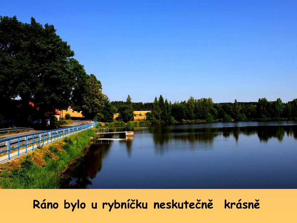Bylo krásné ráno a tak jsem se zase vydal na procházku k našemu rybníčku, chtěl jsem se pokochat ranní přírodou