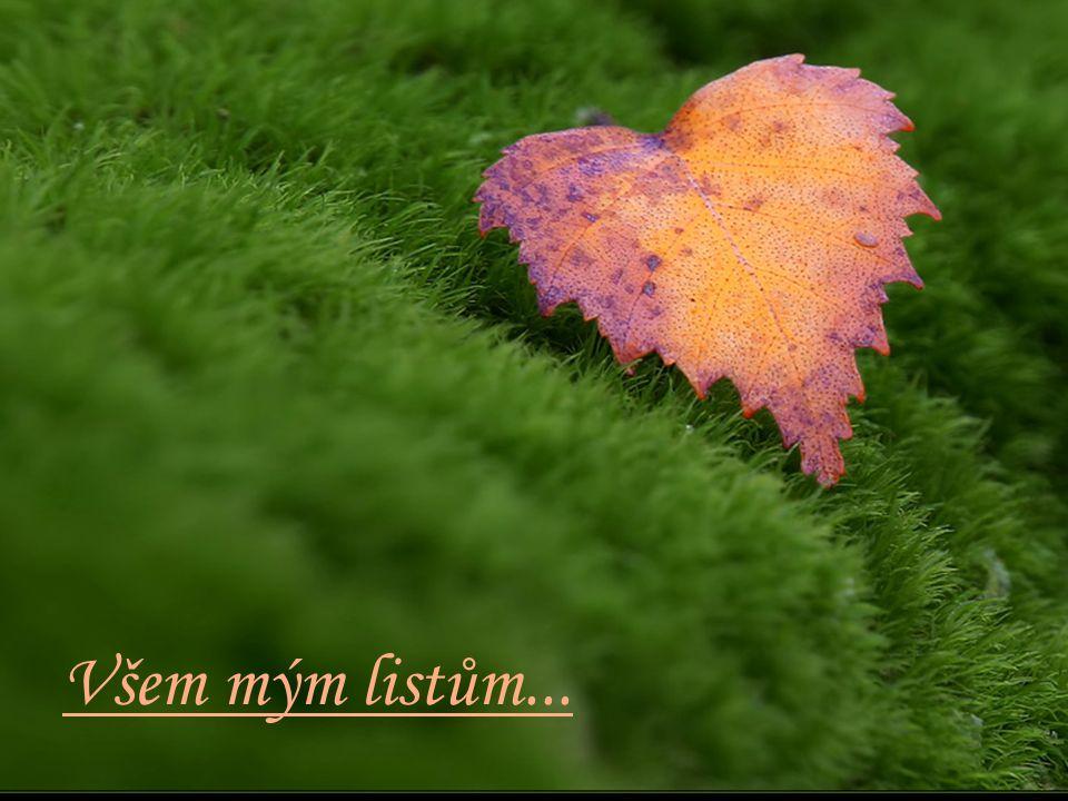 Přeji Ti, lístku z mého stromu, pokoj, lásku, zdraví, [...] a aby se Ti dobře dařilo.