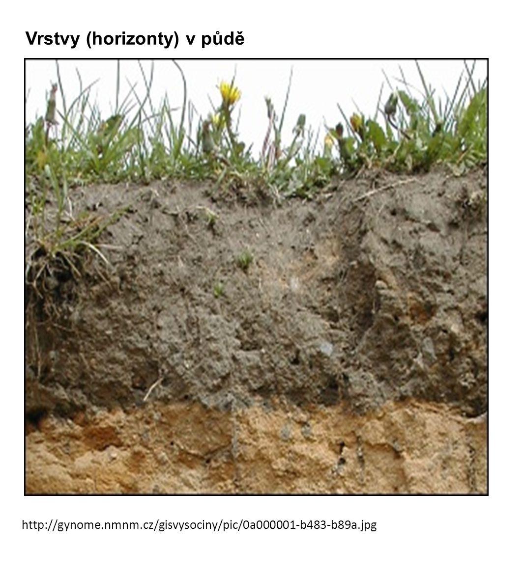 1) Tundrové půdy – subarktický pás, permafrost, glejový proces, půda velmi chudá 2) Podzolové půdy – mírný pás - tajga, podzolizační proces, málo úrodné 3) Černozemě – mírný pás - step a lesostep, málo srážek, matečná hornina - spraš, nejúrodnější půdy - obilnice světa 4) Žlutozemě a červenozemě – půdy vlhkých subtropických lesů, ( profil A, B, C ) proces oželeznění = ferritizace, kyselé půdy - hnojení (bavlna, čaj, tabák, sója..) 5) Pouštní a polopouštní půdy – (sub)tropický pás, roční srážky do 150 mm, min humusu, chudé pastviny, zasolené 6) Červené půdy – mezi 10°s.
