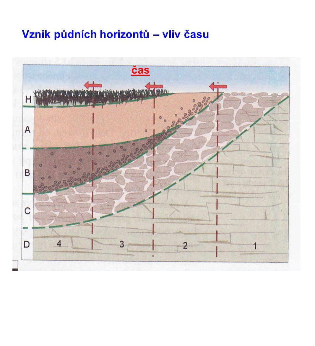 http://geologie.vsb.cz/geomorfologie/Prednasky/8_obrazky/8_12_pudni_horizonty.jpg A – humusový horizont A1 – humus (zbytky organismů) A2 – ochuzený (eluviální) B – půdní horizont (iluviální) C – matečný (půdotvorný) horizont Hlavní půdní horizonty