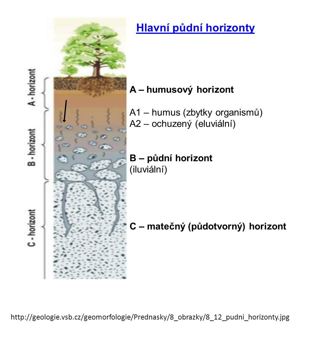 http://geologie.vsb.cz/geomorfologie/Prednasky/8_obrazky/8_12_pudni_horizonty.jpg A – humusový horizont A1 – humus (zbytky organismů) A2 – ochuzený (e