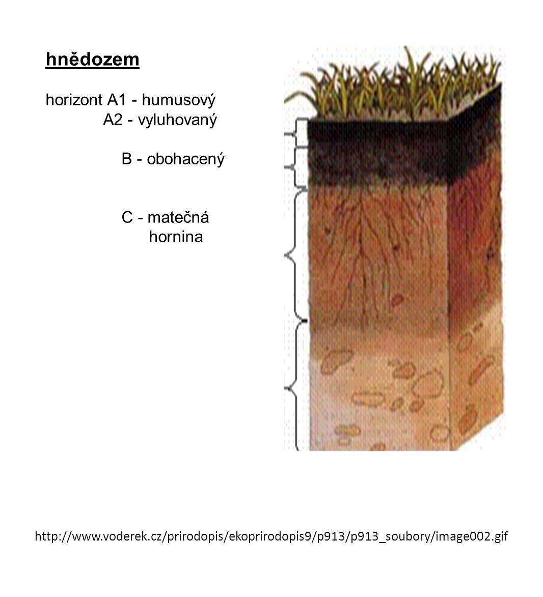 http://www.voderek.cz/prirodopis/ekoprirodopis9/p913/p913_soubory/image002.gif hnědozem horizont A1 - humusový A2 - vyluhovaný B - obohacený C - mateč