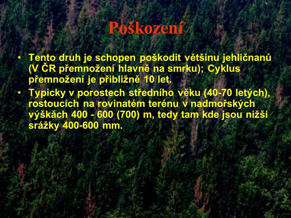 Poškození Tento druh je schopen poškodit většinu jehličnanů (V ČR přemnožení hlavně na smrku); Cyklus přemnožení je přibližně 10 let. Typicky v porost