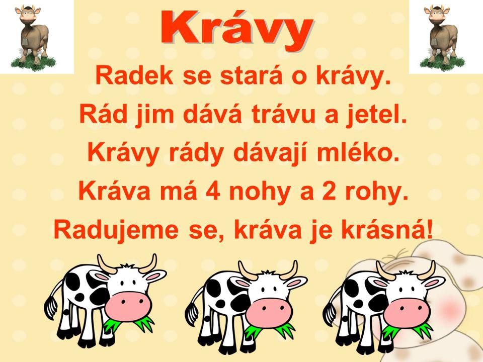Radek se stará o krávy. Rád jim dává trávu a jetel.