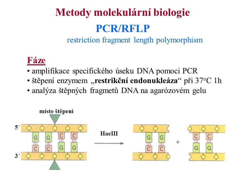 """Metody molekulární biologie PCR/RFLP restriction fragment length polymorphism Fáze amplifikace specifického úseku DNA pomoci PCR štěpení enzymem """"rest"""