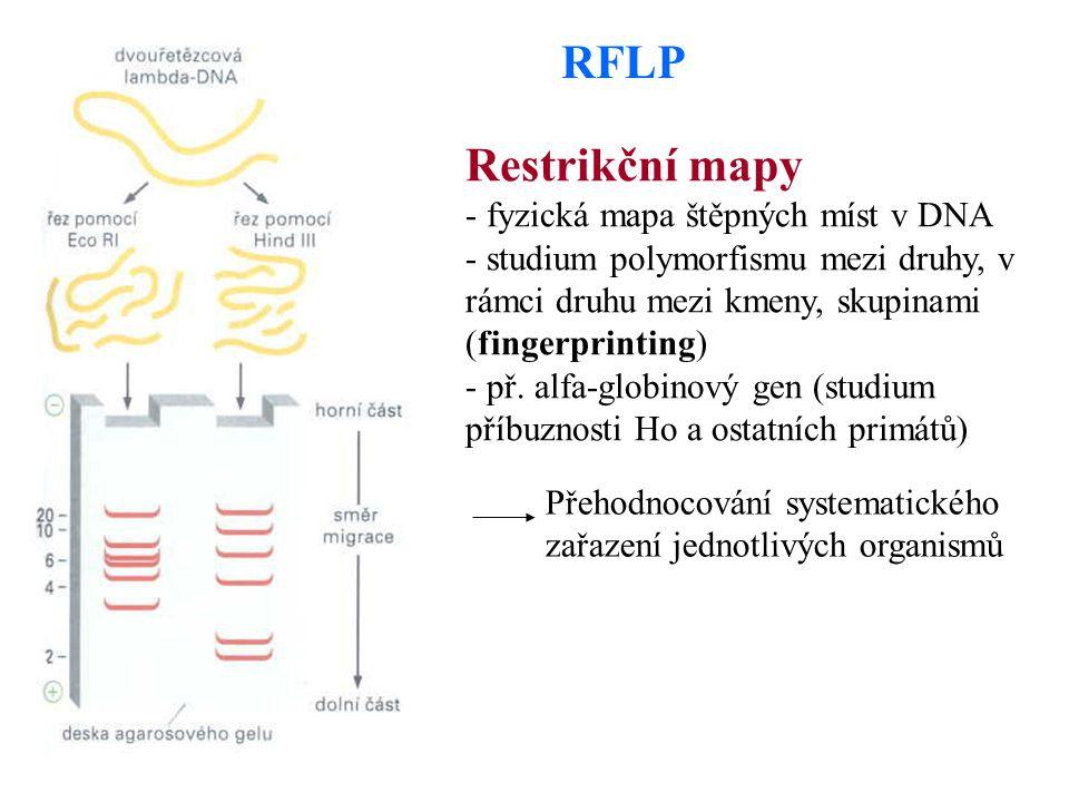 RFLP Restrikční mapy - fyzická mapa štěpných míst v DNA - studium polymorfismu mezi druhy, v rámci druhu mezi kmeny, skupinami (fingerprinting) - př.