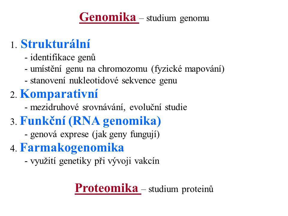 Genomika – studium genomu 1. Strukturální - identifikace genů - umístění genu na chromozomu (fyzické mapování) - stanovení nukleotidové sekvence genu
