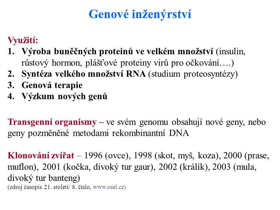 Genové inženýrství Využití: 1.Výroba buněčných proteinů ve velkém množství (insulin, růstový hormon, plášťové proteiny virů pro očkování….) 2.Syntéza