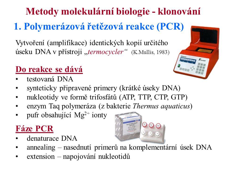 1. Polymerázová řetězová reakce (PCR) Fáze PCR denaturace DNA annealing – nasednutí primerů na komplementární úsek DNA extension – napojování nukleoti