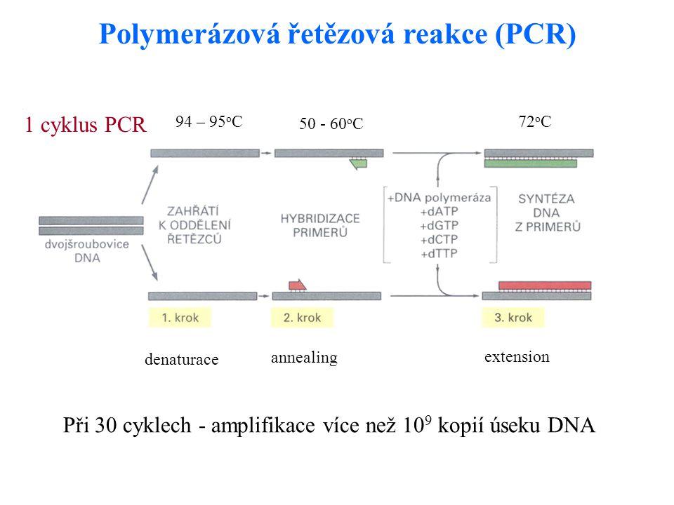 Polymerázová řetězová reakce (PCR) 1 cyklus PCR Při 30 cyklech - amplifikace více než 10 9 kopií úseku DNA denaturace annealing extension 94 – 95 o C