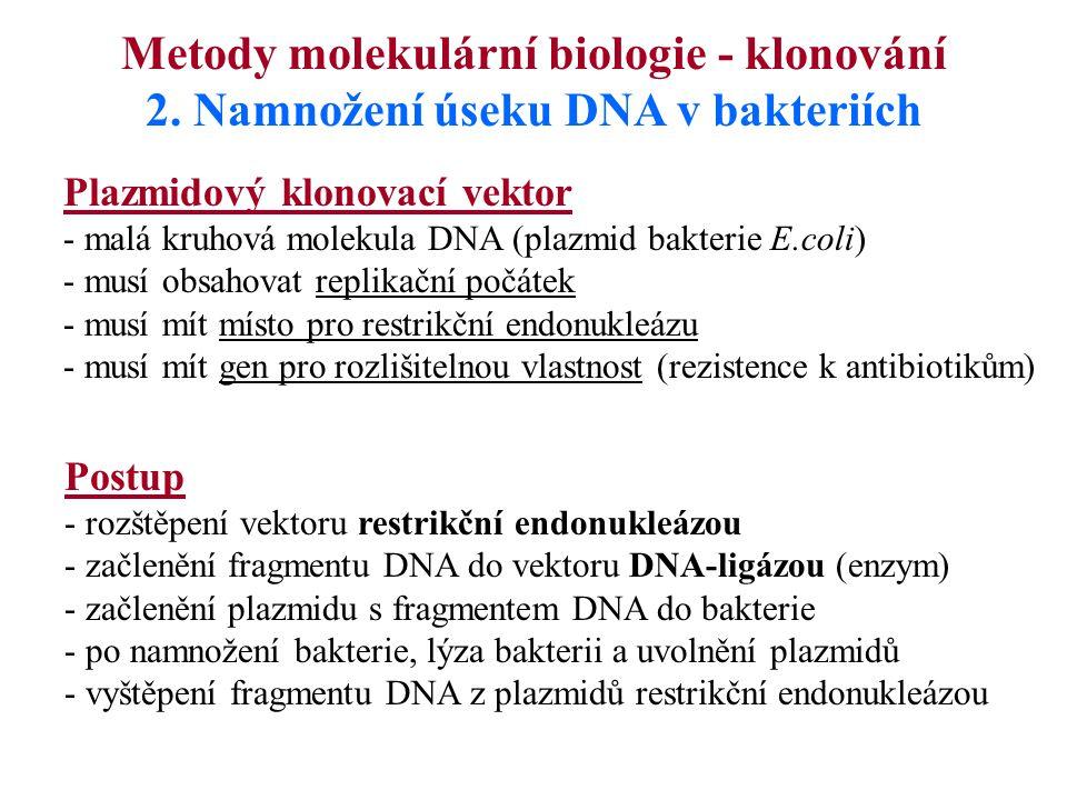 Metody molekulární biologie - klonování 2. Namnožení úseku DNA v bakteriích Postup - rozštěpení vektoru restrikční endonukleázou - začlenění fragmentu