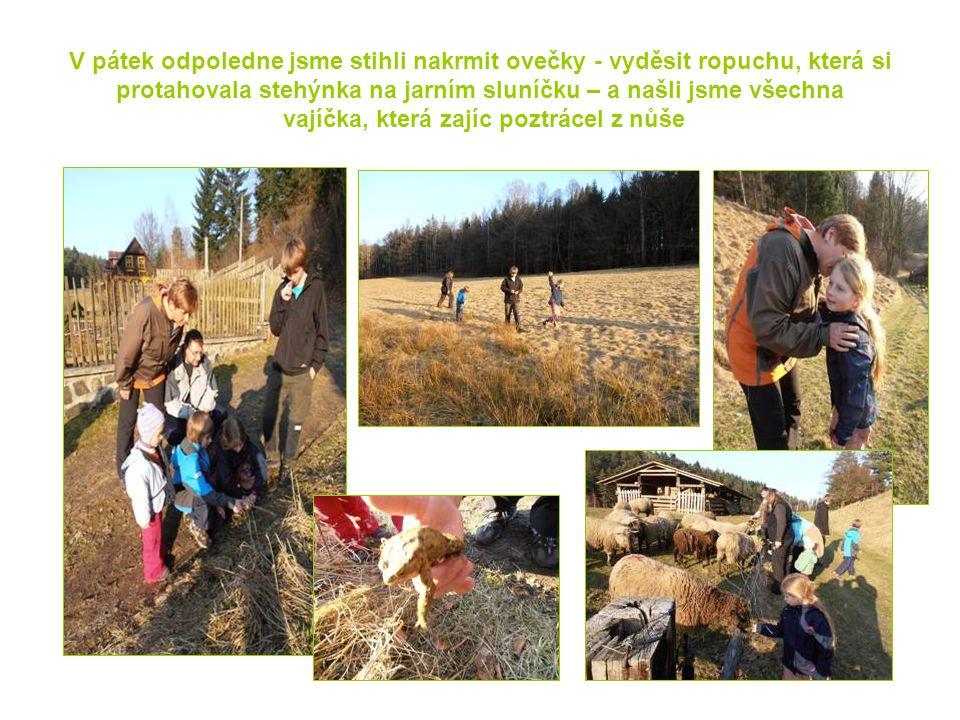 V pátek odpoledne jsme stihli nakrmit ovečky - vyděsit ropuchu, která si protahovala stehýnka na jarním sluníčku – a našli jsme všechna vajíčka, která zajíc poztrácel z nůše