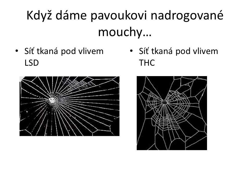 Když dáme pavoukovi nadrogované mouchy… Síť tkaná pod vlivem LSD Síť tkaná pod vlivem THC