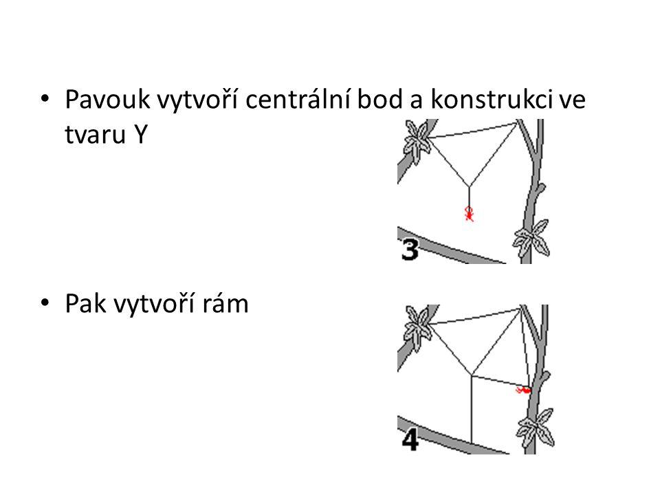 Pavouk vytvoří centrální bod a konstrukci ve tvaru Y Pak vytvoří rám