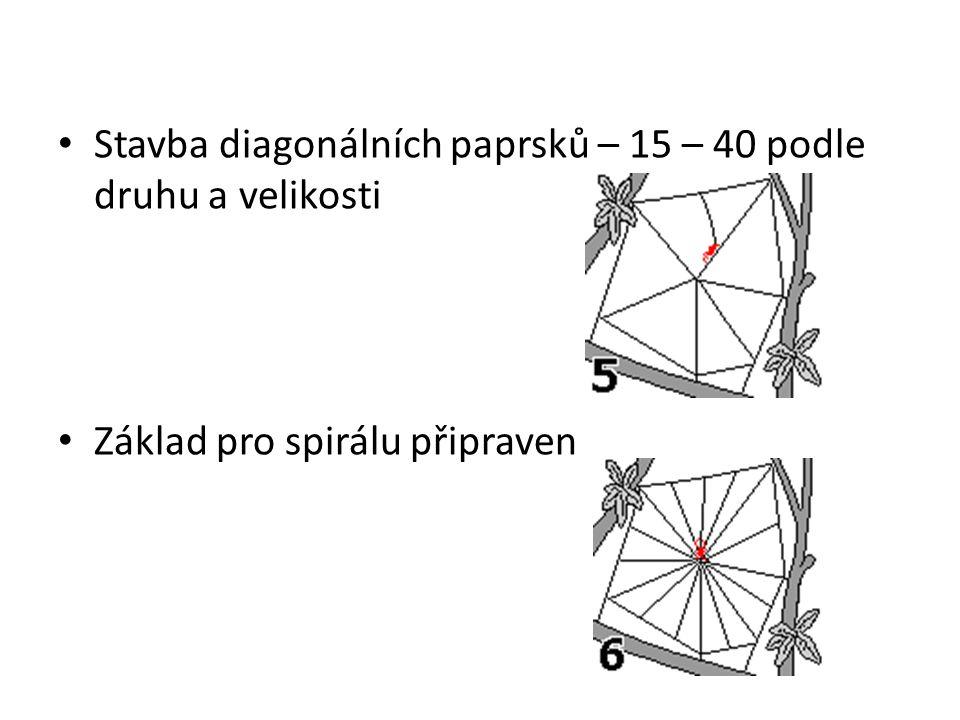 Stavba diagonálních paprsků – 15 – 40 podle druhu a velikosti Základ pro spirálu připraven