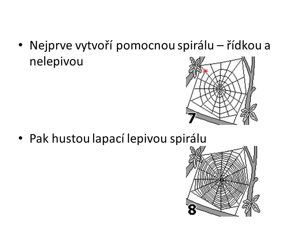 Nejprve vytvoří pomocnou spirálu – řídkou a nelepivou Pak hustou lapací lepivou spirálu