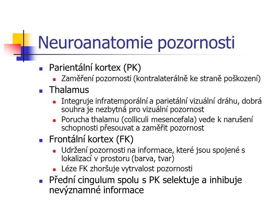 Neuroanatomie pozornosti Parientální kortex (PK) Zaměření pozornosti (kontralaterálně ke straně poškození) Thalamus Integruje infratemporální a pariet