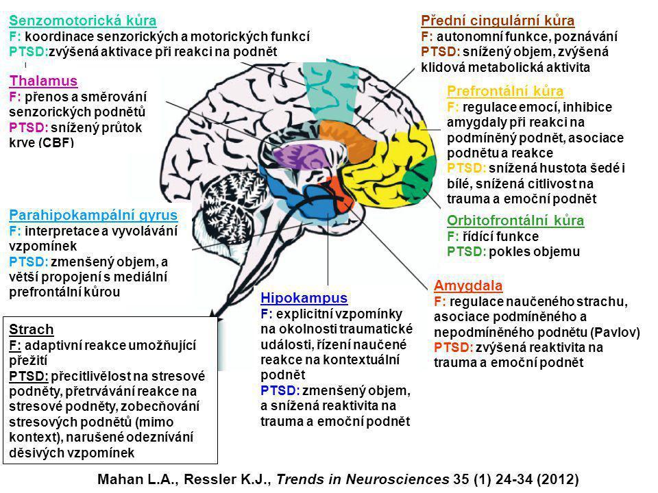 Mahan L.A., Ressler K.J., Trends in Neurosciences 35 (1) 24-34 (2012) Senzomotorická kůra F: koordinace senzorických a motorických funkcí PTSD:zvýšená aktivace při reakci na podnět Thalamus F: přenos a směrování senzorických podnětů PTSD: snížený průtok krve (CBF) Prefrontální kůra F: regulace emocí, inhibice amygdaly při reakci na podmíněný podnět, asociace podnětu a reakce PTSD: snížená hustota šedé i bílé, snížená citlivost na trauma a emoční podnět Amygdala F: regulace naučeného strachu, asociace podmíněného a nepodmíněného podnětu (Pavlov) PTSD: zvýšená reaktivita na trauma a emoční podnět Přední cingulární kůra F: autonomní funkce, poznávání PTSD: snížený objem, zvýšená klidová metabolická aktivita Orbitofrontální kůra F: řídící funkce PTSD: pokles objemu Hipokampus F: explicitní vzpomínky na okolnosti traumatické události, řízení naučené reakce na kontextuální podnět PTSD: zmenšený objem, a snížená reaktivita na trauma a emoční podnět Parahipokampální gyrus F: interpretace a vyvolávání vzpomínek PTSD: zmenšený objem, a větší propojení s mediální prefrontální kůrou Strach F: adaptivní reakce umožňující přežití PTSD: přecitlivělost na stresové podněty, přetrvávání reakce na stresové podněty, zobecňování stresových podnětů (mimo kontext), narušené odeznívání děsivých vzpomínek