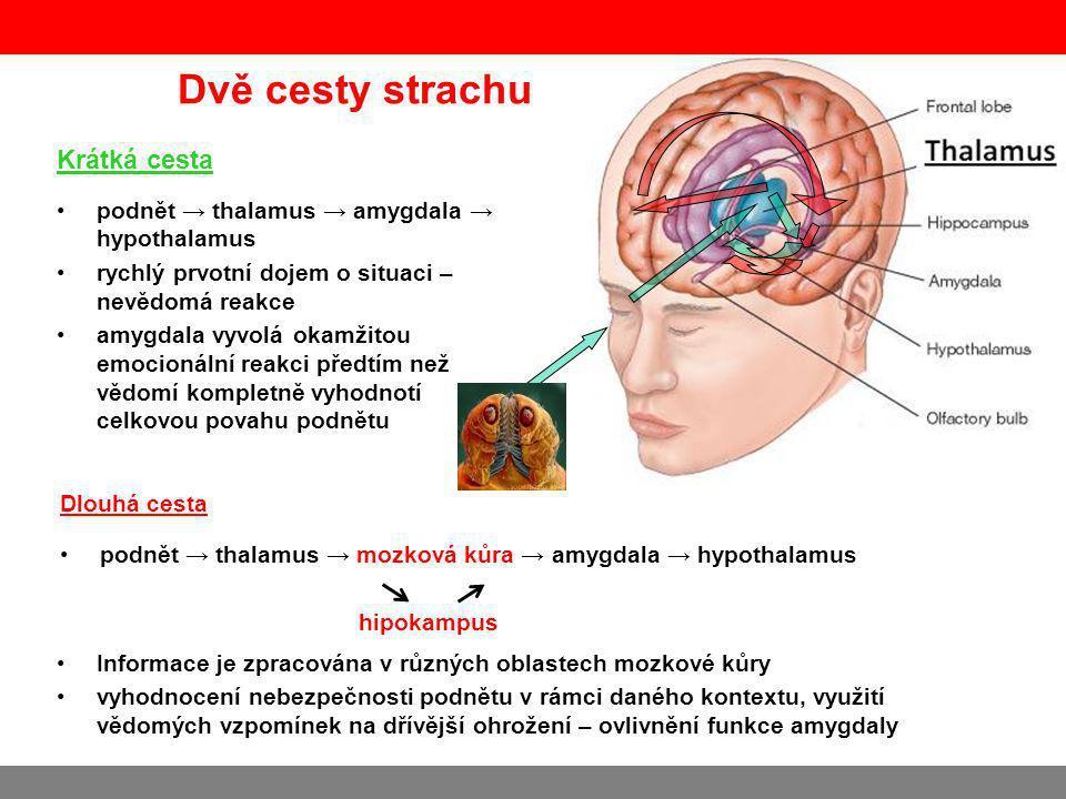 Dvě cesty strachu Krátká cesta podnět → thalamus → amygdala → hypothalamus rychlý prvotní dojem o situaci – nevědomá reakce amygdala vyvolá okamžitou emocionální reakci předtím než vědomí kompletně vyhodnotí celkovou povahu podnětu Dlouhá cesta podnět → thalamus → mozková kůra → amygdala → hypothalamus Informace je zpracována v různých oblastech mozkové kůry vyhodnocení nebezpečnosti podnětu v rámci daného kontextu, využití vědomých vzpomínek na dřívější ohrožení – ovlivnění funkce amygdaly hipokampus
