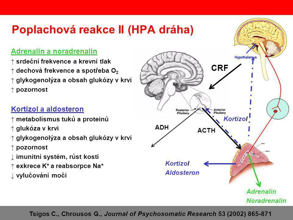 Poplachová reakce II (HPA dráha) CRF ACTH Kortizol Adrenalin Noradrenalin Kortizol Aldosteron ADH Adrenalin a noradrenalin ↑ srdeční frekvence a krevní tlak ↑ dechová frekvence a spotřeba O 2 ↑ glykogenolýza a obsah glukózy v krvi ↑ pozornost Kortizol a aldosteron ↑ metabolismus tuků a proteinů ↑ glukóza v krvi ↑ glykogenolýza a obsah glukózy v krvi ↑ pozornost ↓ imunitní systém, růst kostí ↑ exkrece K + a reabsorpce Na + ↓ vylučování moči Tsigos C., Chrousos G., Journal of Psychosomatic Research 53 (2002) 865-871