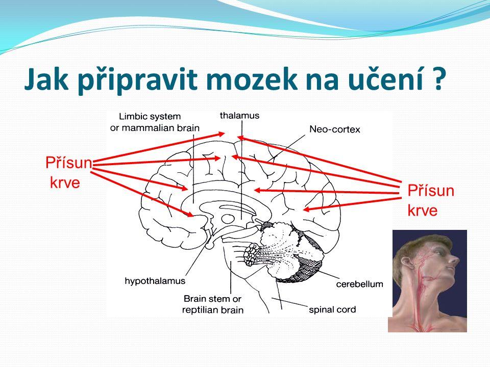 Jak připravit mozek na učení ? Přísun krve Přísun krve