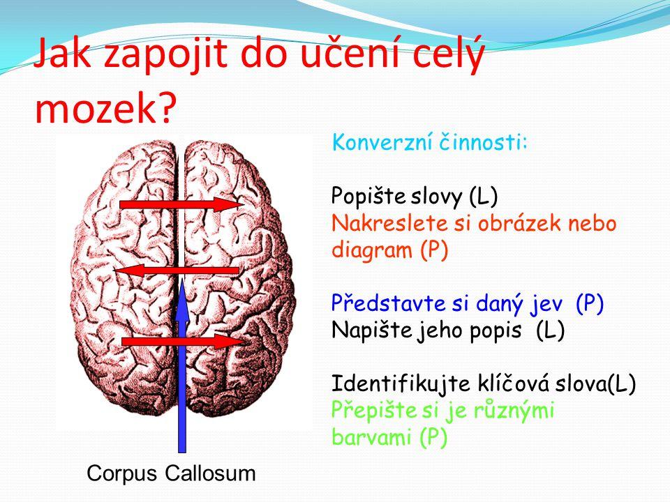 Jak zapojit do učení celý mozek.