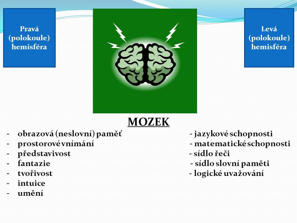 MOZEK -obrazová (neslovní) paměť - jazykové schopnosti -prostorové vnímání - matematické schopnosti -představivost - sídlo řeči -fantazie - sídlo slovní paměti -tvořivost - logické uvažování -intuice -umění Pravá (polokoule) hemisféra Levá (polokoule) hemisféra