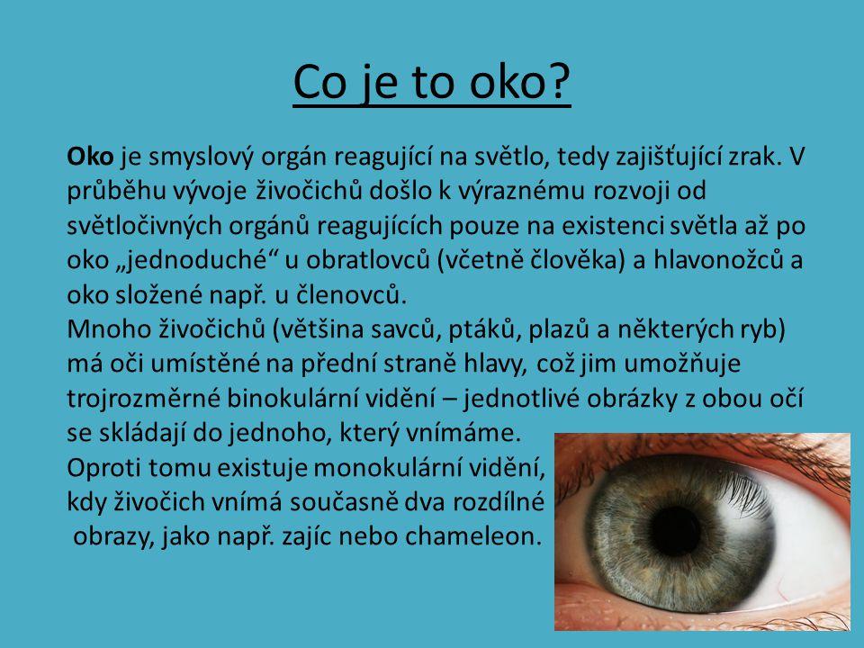Co je to oko? Oko je smyslový orgán reagující na světlo, tedy zajišťující zrak. V průběhu vývoje živočichů došlo k výraznému rozvoji od světločivných