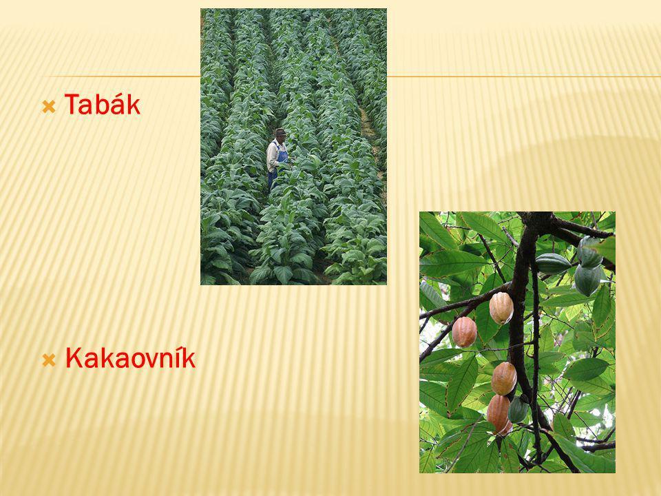  Tabák  Kakaovník