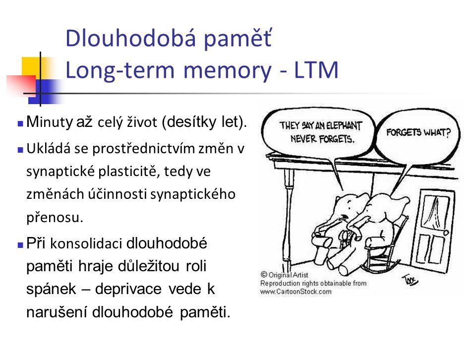 Dlouhodobá paměť Long-term memory - LTM M inut y až celý život (desítky let). Ukládá se prostřednictvím změn v synaptické plasticitě, tedy ve změnách