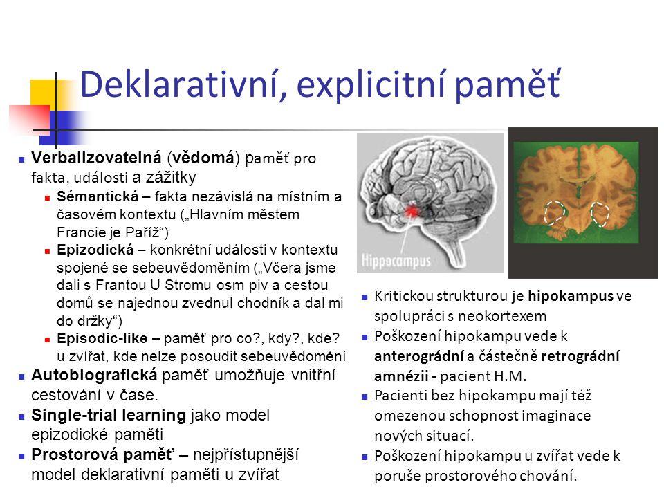 Deklarativní, explicitní paměť Verbalizovatelná (vědomá) p aměť pro fakta, události a zážitky Sémantická – fakta nezávislá na místním a časovém kontex