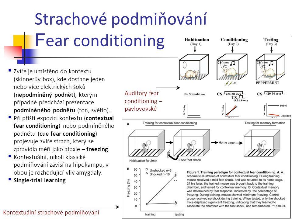 Strachové podmiňování F ear conditioning Auditory fear conditioning – pavlovovské Kontextuální strachové podmiňování  Zvíře je umístěno do kontextu (