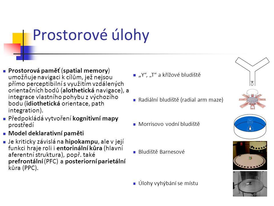 Prostorové úlohy Prostorová paměť (spatial memory) umožňuje navigaci k cílům, jež nejsou přímo perceptibilní s využitím vzdálených orientačních bodů (