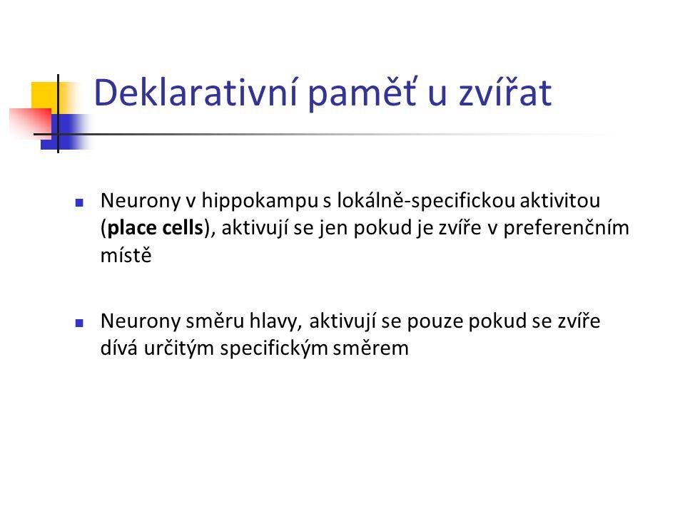 Deklarativní paměť u zvířat Neurony v hippokampu s lokálně-specifickou aktivitou (place cells), aktivují se jen pokud je zvíře v preferenčním místě Ne